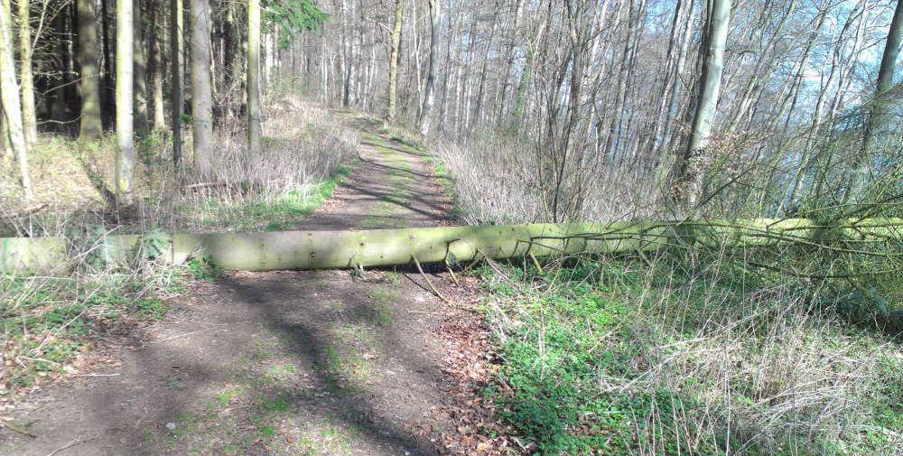 Ein umgefallener Baum, der sich über einen Weg gelegt hat.